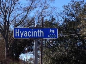 hyacinth bike lane
